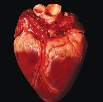 Real human heart images - photo#3